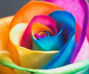 flowers, rose, and rainbow image