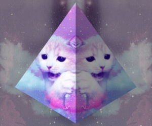 background, weird, and cat image