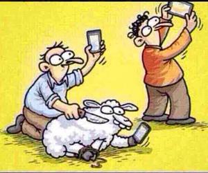 eid, photos, and sheep image