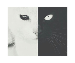 black and white, cat, and wallpaper image