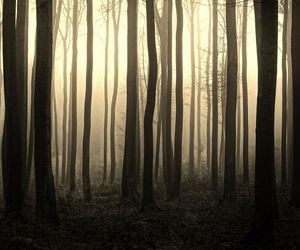autumn, cold, and fog image