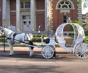 carriage, horse, and wedding image