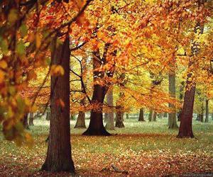 autum, oktober, and Dream image