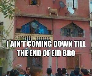 arabs, eid, and funny image
