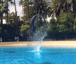 beautiful, dolphin, and tricks image