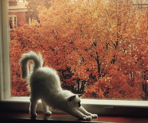 autumn, fall, and cat image