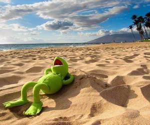 beach, funny, and kermit image