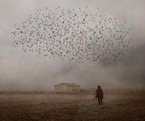 birds, alone, and dark image