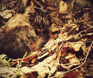 autumn, brown, and camouflage image