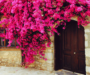 flowers, pink, and amazing image