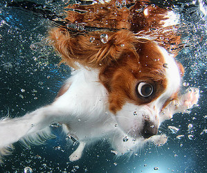 dog, underwater, and puppy image
