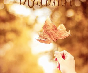 autumn, lovely, and leaves image