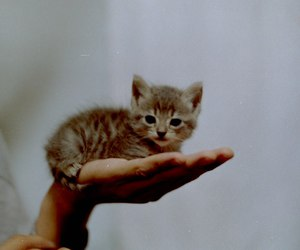 cat, cute, and little image