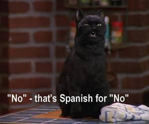 salem, cat, and no image