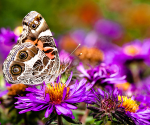 arkansas, purple, and butterfly image