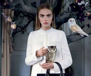 cara delevingne, model, and mulberry image