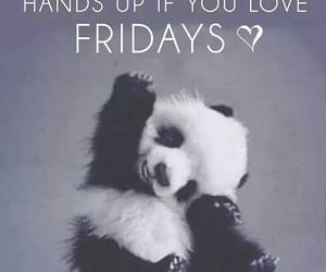 animals, friday, and panda image