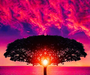 tree, sunset, and sun image