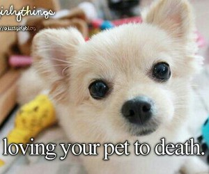 pet and love image