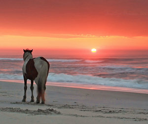 beach and paint horse image
