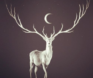moon, deer, and animal image