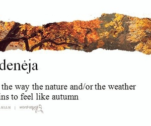 autumn, nature, and rudeneja image