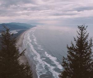 tree, grunge, and beach image