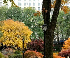 autumn, Central Park, and new york image