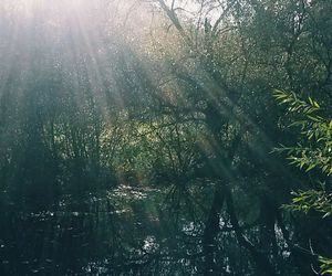 forest, grunge, and hipster image
