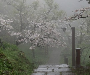 nature, japan, and tree image