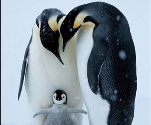penguin, animal, and family image