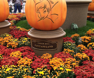 disneyland, flowers, and Halloween image