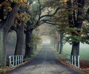 nature, tree, and road image