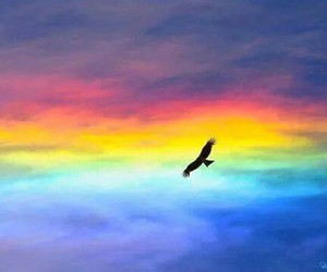 bird, colorful, and fly image