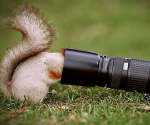 animal, camera, and funny image