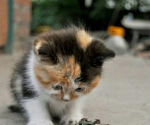 beautiful, cats, and kitten image