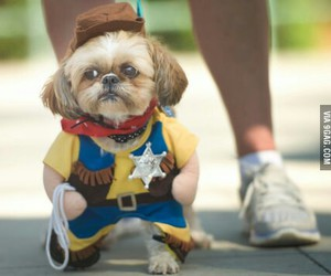 costume, cutest, and dog image
