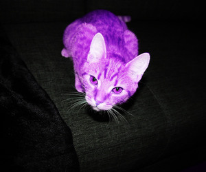 cat, purple, and lalabanana image