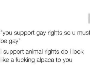 funny, gay, and gay rights image
