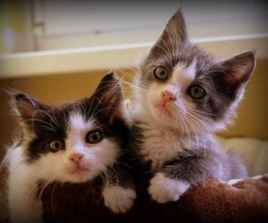 beautiful, sweet, and cats image