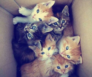 cats✨✨ image