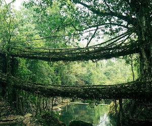 india, bridge, and leaves image