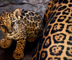 animal, girl, and leopard image