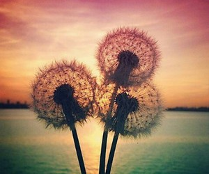 lovely, nature, and fowers image