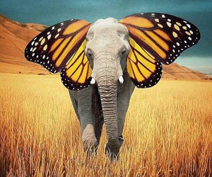cool and elephant image
