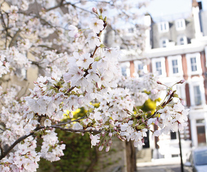 london and cherry flowers image