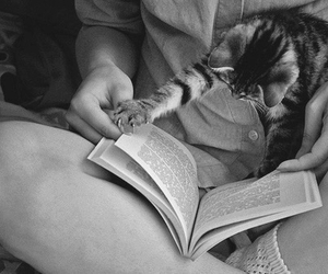 animal, black and white, and book image