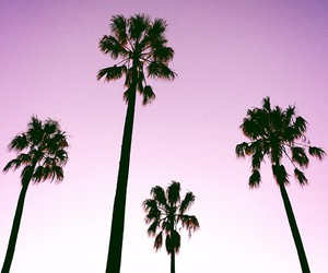 summer, palm trees, and pink image