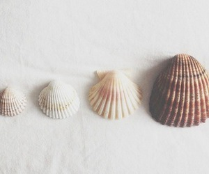 shell, sea, and beach image