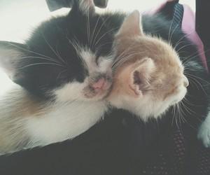 cat, soo cute, and cute image